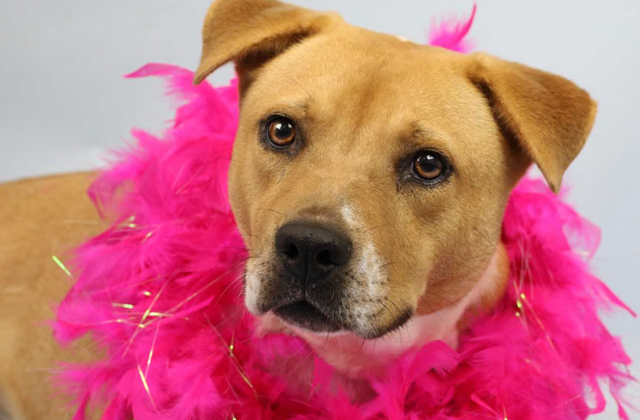 Adoption: Dress-Up Dog