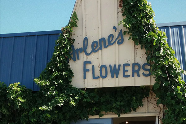 US Supreme Court Passes on Arlene's Flowers