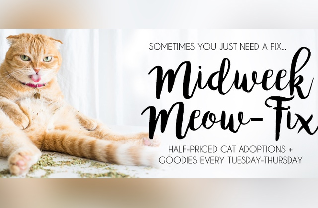 Pets: Get Your Midweek Meow Fix