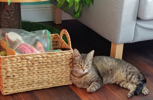Good Luck Cat Cafe Finds New Home