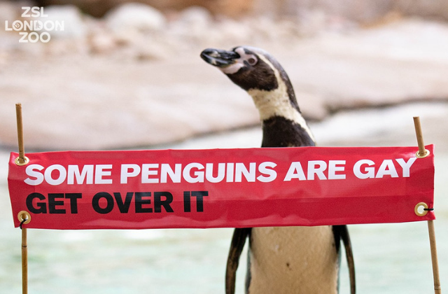 London Zoo to Host Pride Celebration with Gay Penguins