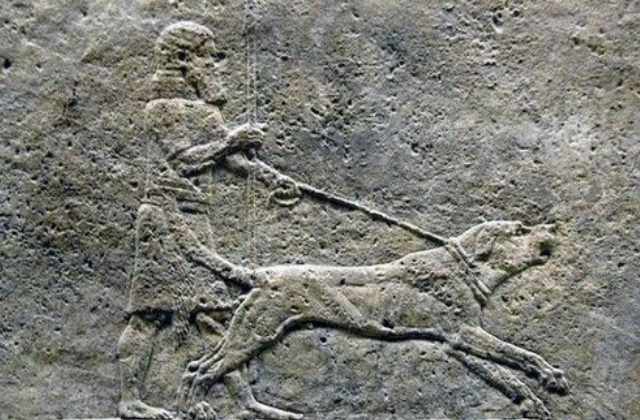 PERITAS, ALEXANDER THE GREAT'S GREAT DOG