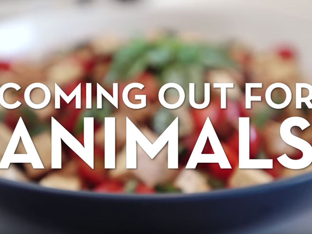 Non-Profit Connects Gay Rights to Animal Rights