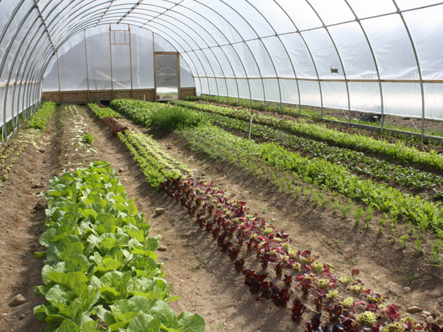 Dining: Farm to Table Dining